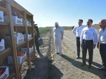 Стоимость патента для ИП в Астрахани будет зависеть от места предпринимательской деятельности: село или город