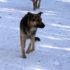 В Астраханской области введен штраф за отсутствие предупреждающей надписи перед входом на земельный участок владельца собаки