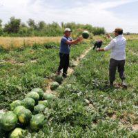 Утвержден Порядок субсидирования сельхозпроизводителей