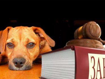 В Астраханской области урегулирован порядок обращения с животными без владельцев