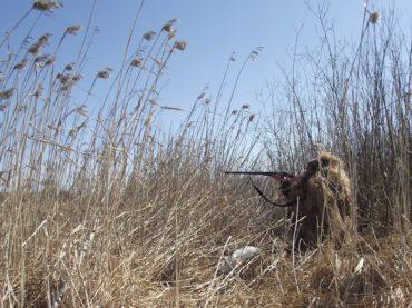Новые условия охоты в Астраханской области