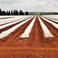 Специалисты агропромышленного комплекса могут получить меры социальной поддержки